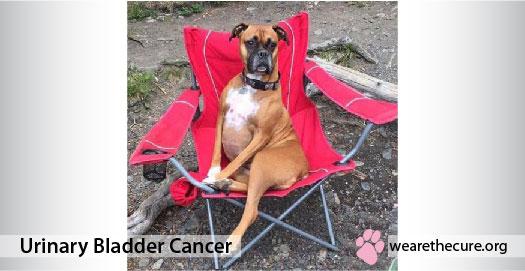 Urinary Bladder Cancer