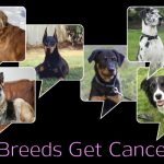 Which Dog Breeds Get Cancer the Most