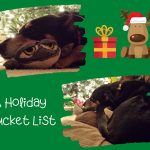 A Holiday Bucket List For Canine Companions