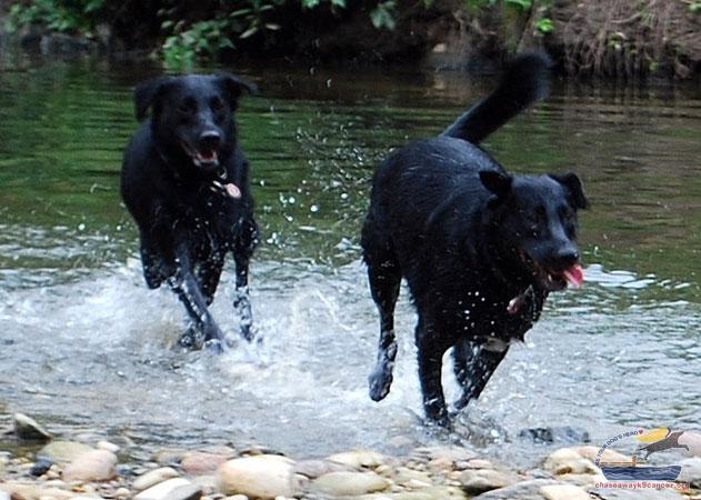 Canine Cancer Memorials