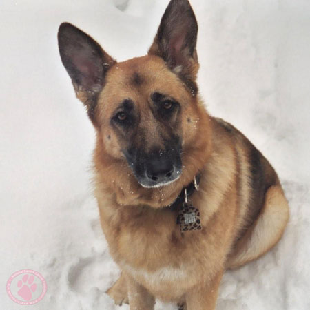 Canine Cancer Memorial
