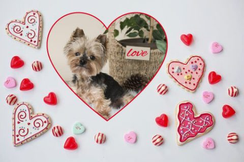 Top Ten Valentine's Day Ideas to Make Your Dog Feel Special