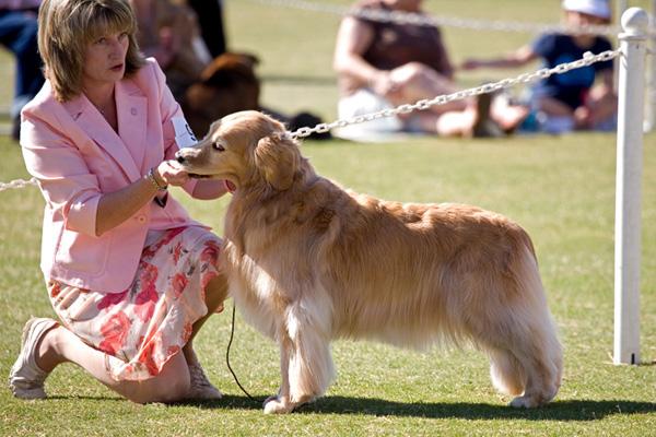 National Canine Cancer Foundation Team
