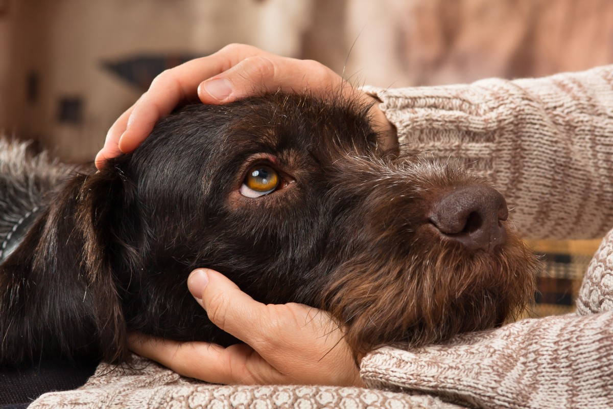 early signs of cancer in dogs - hands petting dog