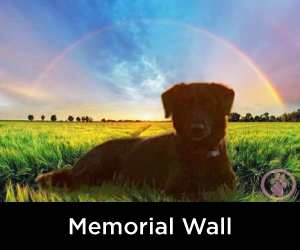 Memorial Wall our own Rainbow Bridge Memorials