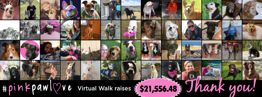 #PinkPawLove Virtual Walk raises $21,556