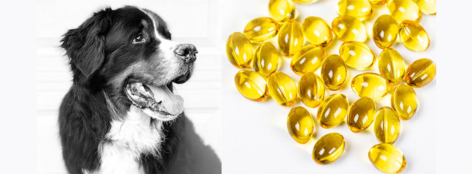 Is Fish Oil Good for Dogs?