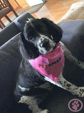 Canine Cancer Memorial Donation